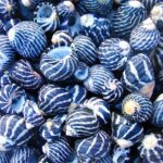 Prussian Blue.seashells..P